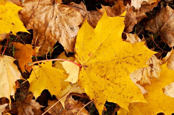 Golden Dreams of Fall