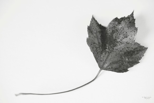 Portrait of a Leaf in Black and White