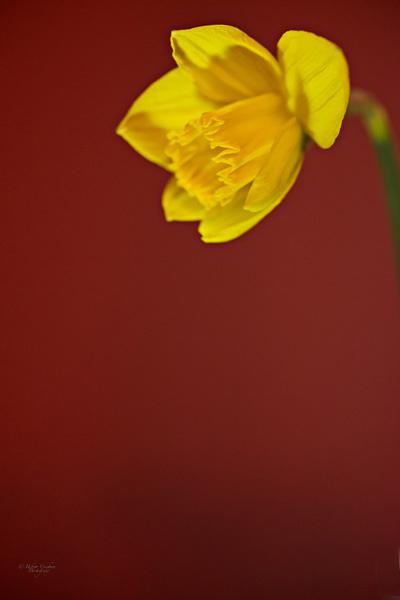 Spring has Sprung II